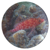 Coral Hawkfish ThermoSaf Dinner Plate   Underwater Photo Coral Reef Dish   Ocean/Nautical Theme - Plate