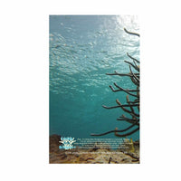 Fish In  Coral Reef Scuba Dive Log Book - Diving Journal/Logbook