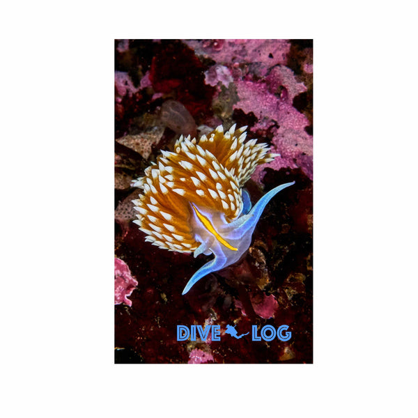 Opalescent Nudibranch Scuba Dive Log Book - Diving Journal/Logbook