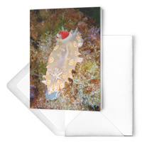 "Nudibranch Christmas Card Set of 10 - Santa Nudibranch - 7""x5"" Photo Holiday Card - Blank Inside - Ocean/Nautical/Sealife"
