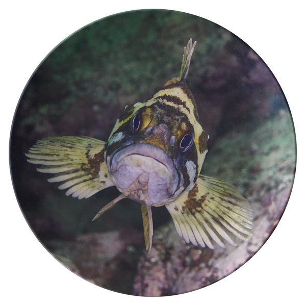 Fish Face 3 Thermosaf© Dinner Plate - Kelp Rockfish - Boat/Picnic Ware - Plastic Dish - Underwater Photo - Ocean/Sealife