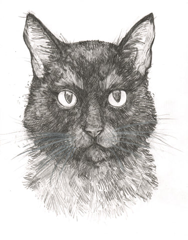 Original Art | Black Cat | 6x8 Original Pencil Drawing