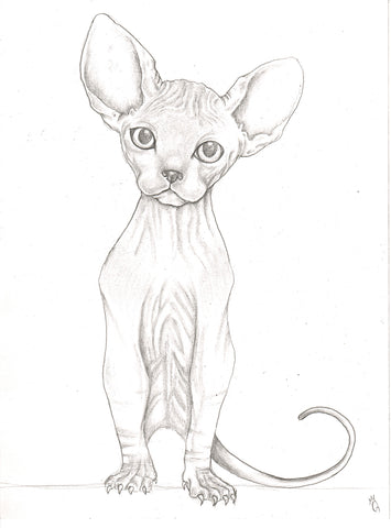 Original Art | Hairless Cat | 6x8 Original Pencil Drawing by Q Wood