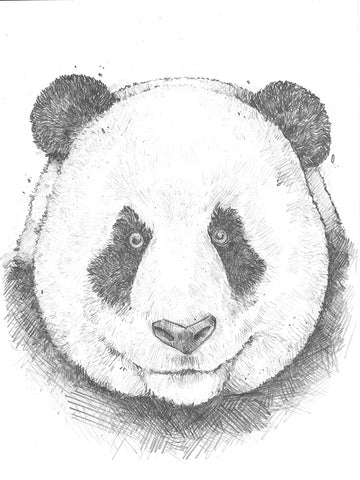 Original Art | Panda | 6x8 Original Pencil Drawing