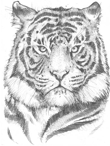 Original Art | Tiger | 6x8 Original Pencil Drawing