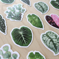 50 Assorted Stickers