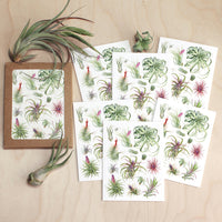 Tillandsia Notecard