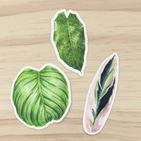 Marantaceae Sticker Set