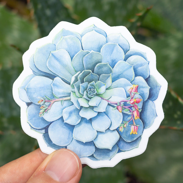 Echeveria imbricata Sticker