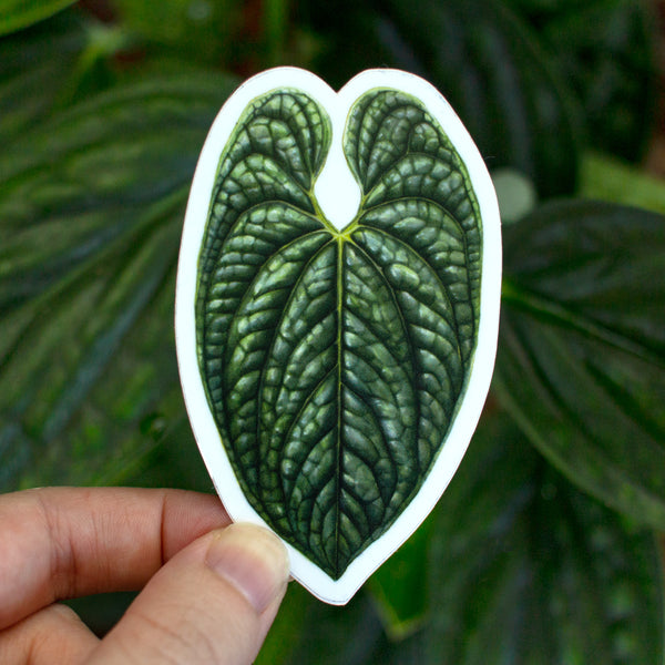 Anthurium luxurians Sticker