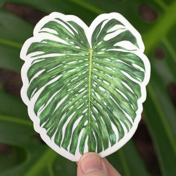 Monstera deliciosa Sticker