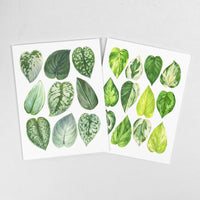 Pothos Notecard Set