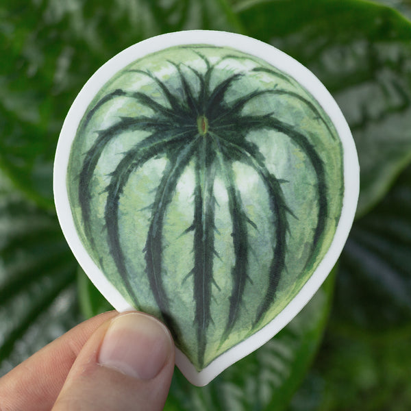 Peperomia argyreia (Watermelon) Sticker