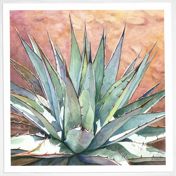 Agave parryi var. couesii