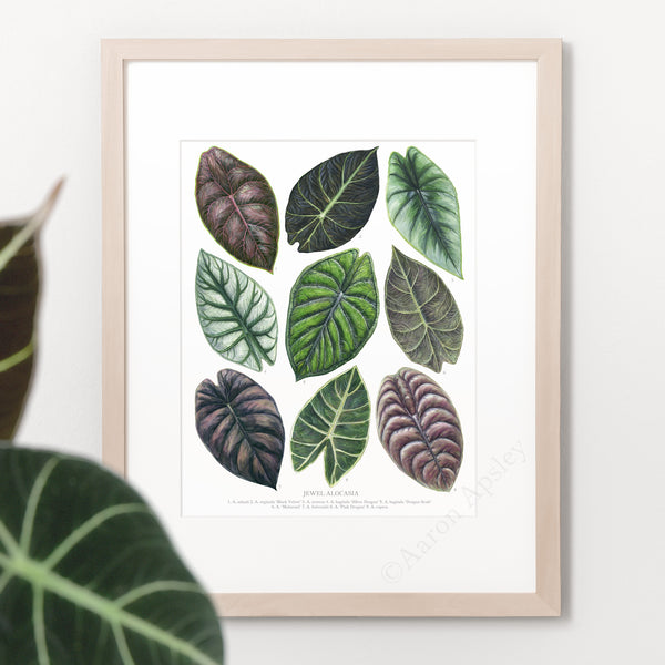 Jewel Alocasia Varieties Print