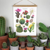 Flowering Cactus Species Print
