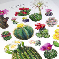 Flowering Cactus Species Poster