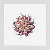 Purple Gymocalycium - Original Watercolor