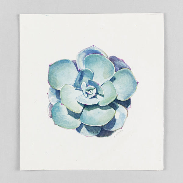 Echeveria imbricata - Original Watercolor