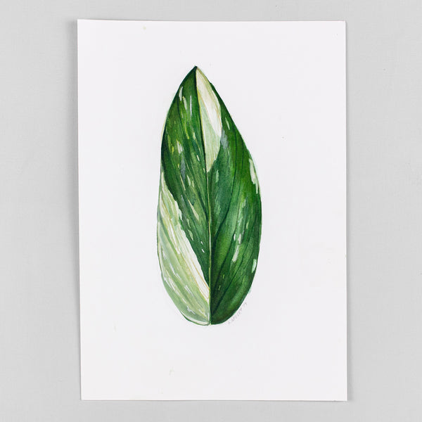 Monstera standleyana 'albo variegata' - Original Watercolor