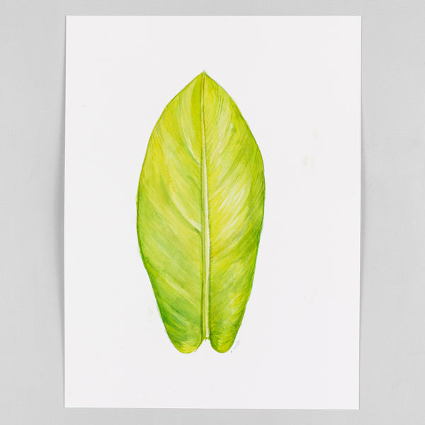 Philodendron 'Lemon Lime' - Original Watercolor
