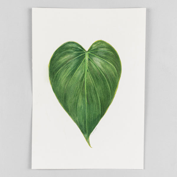 Philodendron hederaceum - Original Watercolor