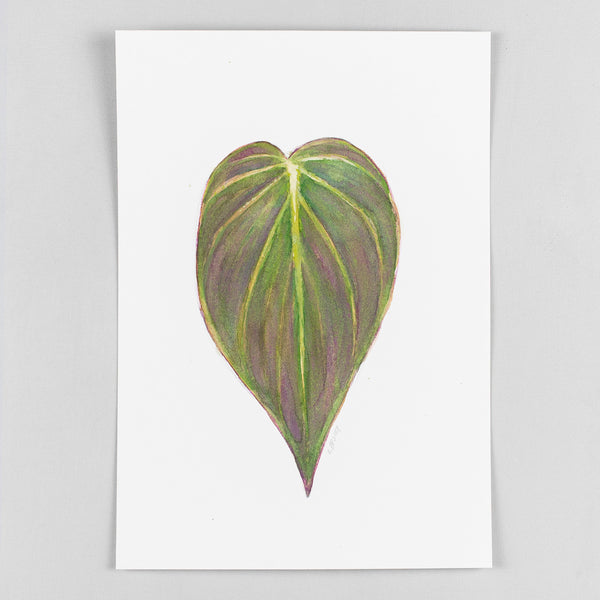 Philodendron micans - Original Watercolor