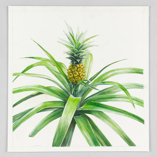 Pineapple Plant - Original Watercolor