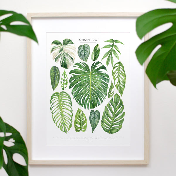 Monstera Species Print