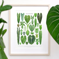 Philodendron Species Print
