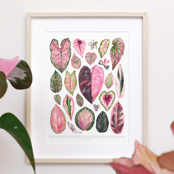 Pink Houseplants Print