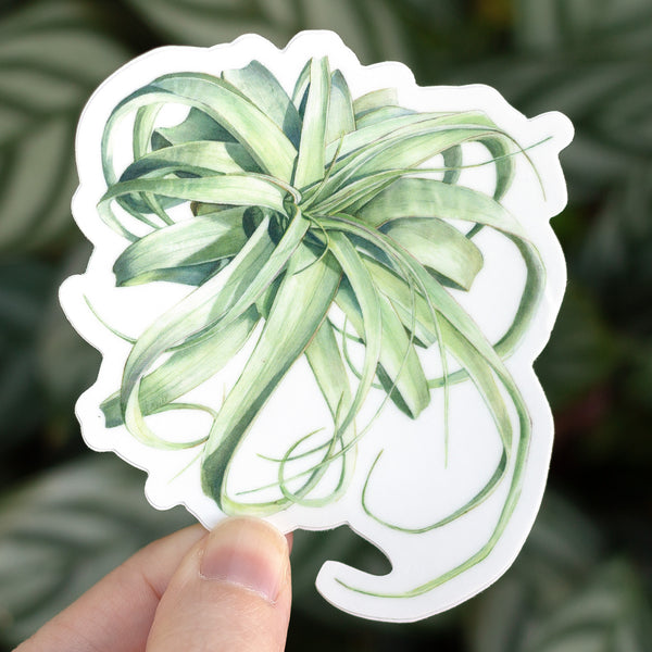 Tillandsia xerographica Sticker