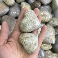 Natural Dinosaur Bone Fossil Puffy Hearts | 2 Pcs | Approx 5-6cm
