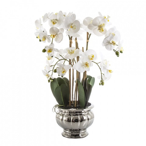 Potted Orchid in Silver Bowl Lge White