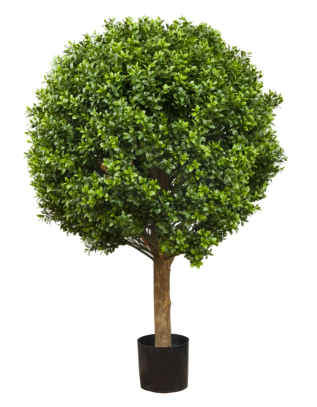 Boxwood Ball Tree 75cm