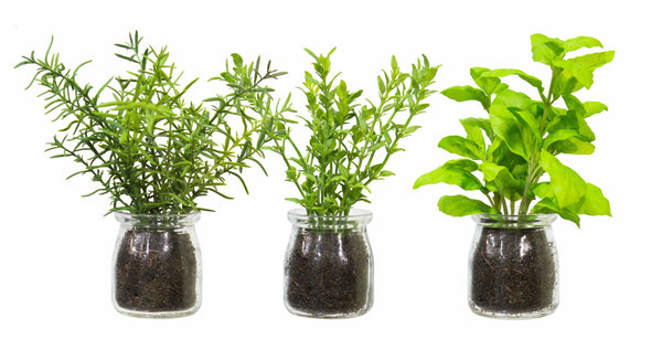 Herbs in Glass Bottle Asstd.