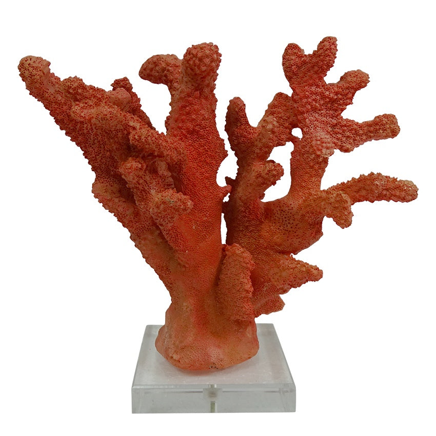 Red Coral with Acrylic Base 19cm