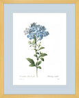Botanical #01 Print with Blue Mat