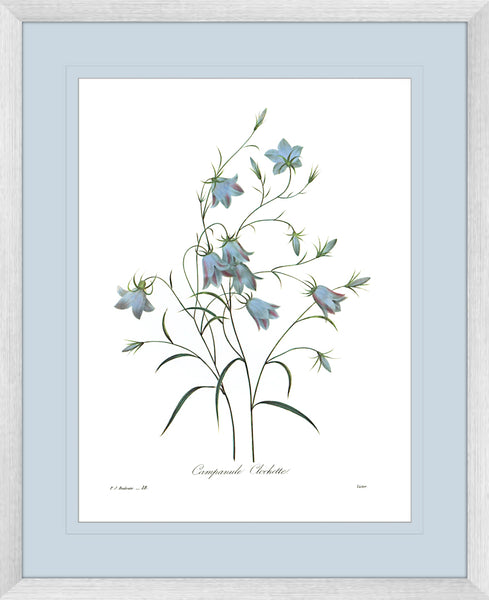 Botanical #03 Print with Blue Mat