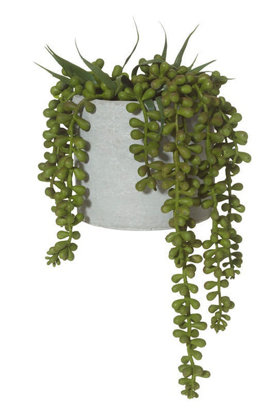 String of Pearls-Cement Pot