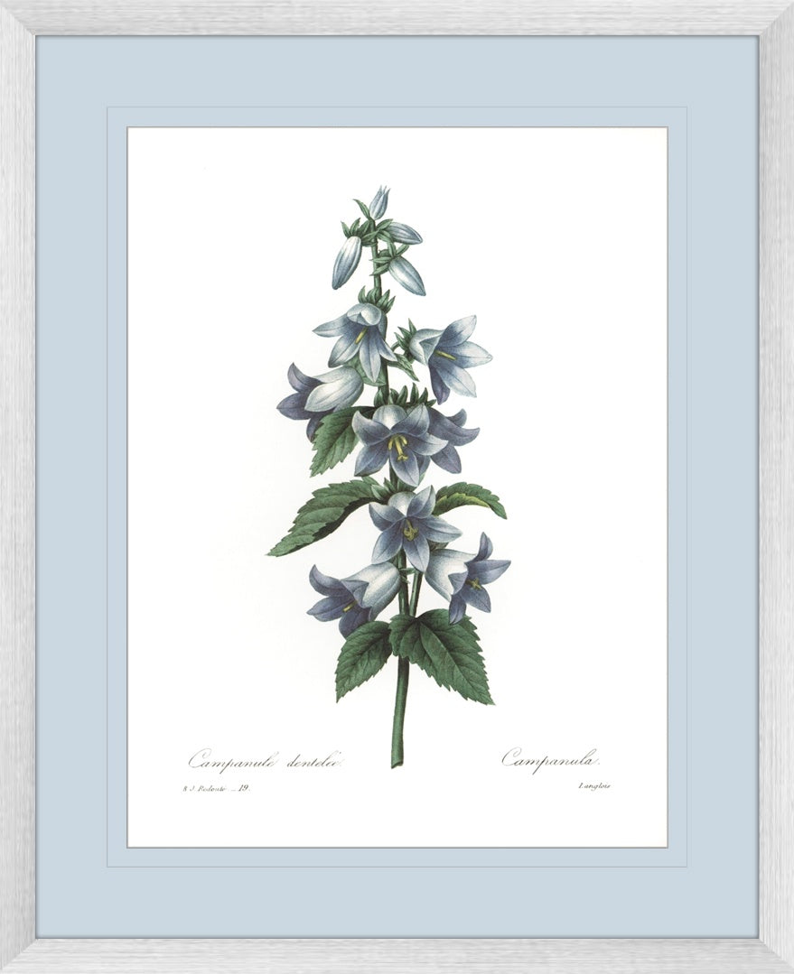 Botanical #04 Print with Blue Mat