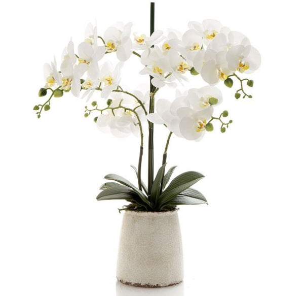 Orchid in Ivory Pot 60cm