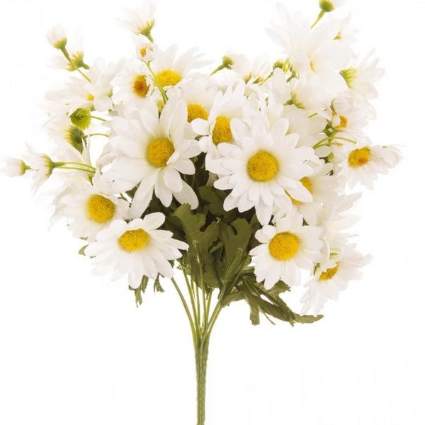 Daisy Bush White
