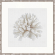 Fanciful Coral I