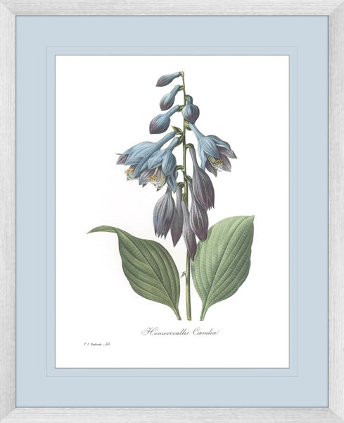 Botanical #02 Print with Blue Mat