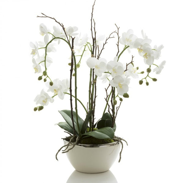 Orchid R/Touch in Wht Pot Silver Rim