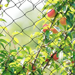 Wide x 5M Extra Strong Anti Bird Netting Garden Allotment Doesn't Tangle and Reusable Lasting Protection Against Birds Deer
