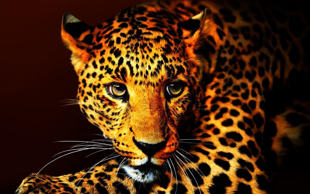 Leopard Number 1, by Ron Cole