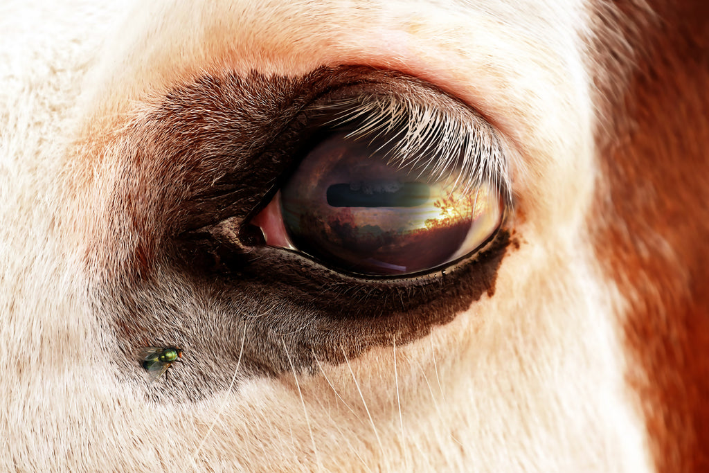 Painted Horse Eye, by Ron Cole