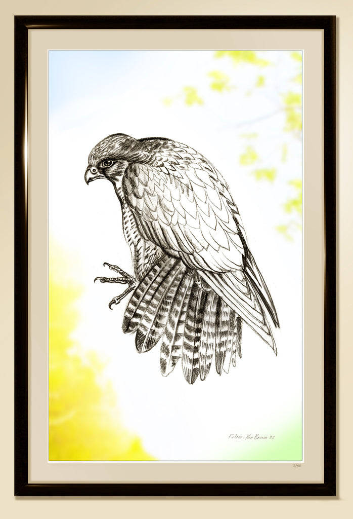 Falcon, by Ken Brown 1983 - Limited Edition 1/50, Framed and Matted - Cole's Aircraft